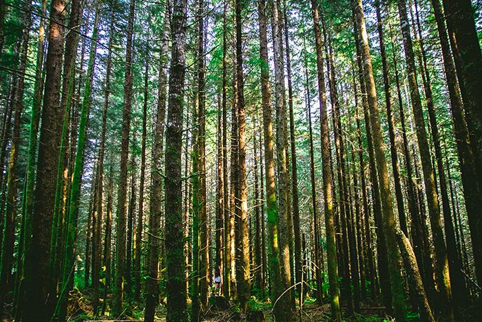 Na rozkaz Pana lasy idrzewa pachnące ocieniać będą Izraela