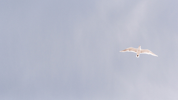 Ujrzałem Ducha, któryzstępował znieba jak gołębica